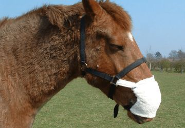 Equine Breather Training Pack