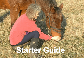 Equine Breathing Starter Guide